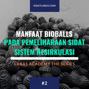 manfaat-bioballs-pada-pemeliharaan-ikan-sidat