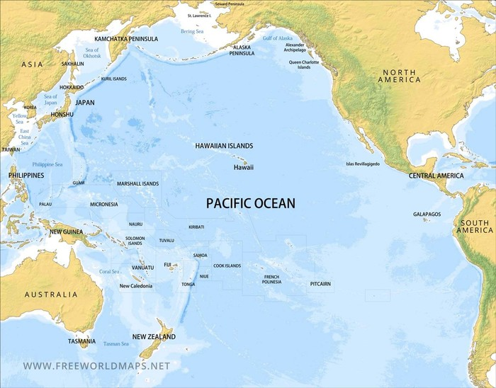 Sidat Polinesia Sirip Panjang
